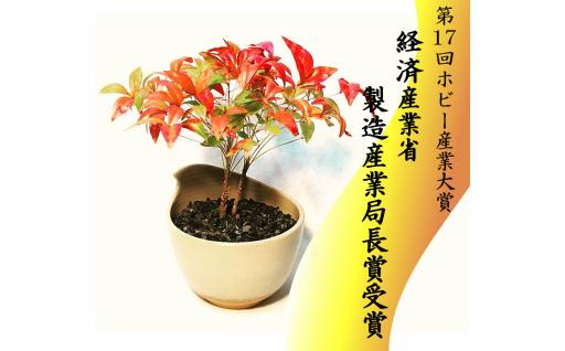 限定7個 64-(6)川竹庭園オリジナルbon彩 Uraha -ナンテン