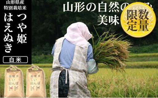 [№5805-2004]【山形県産2銘柄食べ比べ】つや姫・はえぬき 白米各10kg