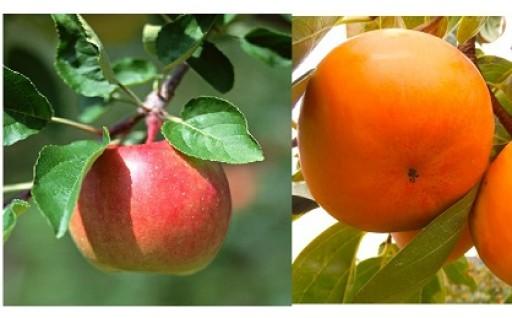 (404) 柿りんごセット
