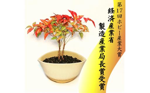 限定7個 64-(10)川竹庭園オリジナルbon彩 Nikaku-ナンテン