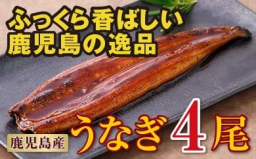802 鹿児島産特上うなぎ4尾!