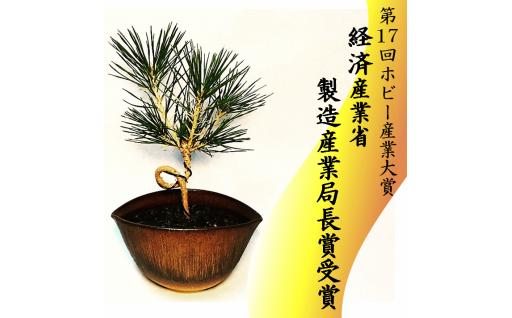 限定4個 64-(9)川竹庭園オリジナルbon彩 Nikaku-松