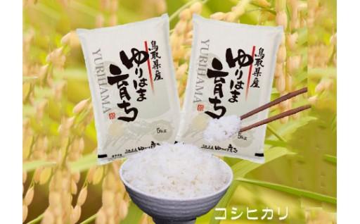 105D.ゆりはま育ちのお米◇無洗米10kg◇
