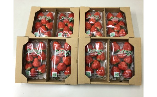 【B-11】香川県オリジナル品種 ご家庭用さぬきひめいちご