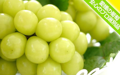 大房シャインマスカット(約800g 愛媛産) ただいま大人気の葡萄品種! 安心のプロ選別品です