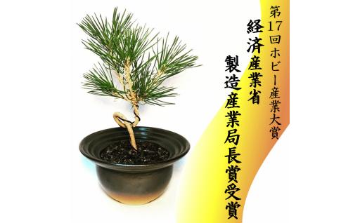 限定4個 64-(7)川竹庭園オリジナルbon彩 Samon -松