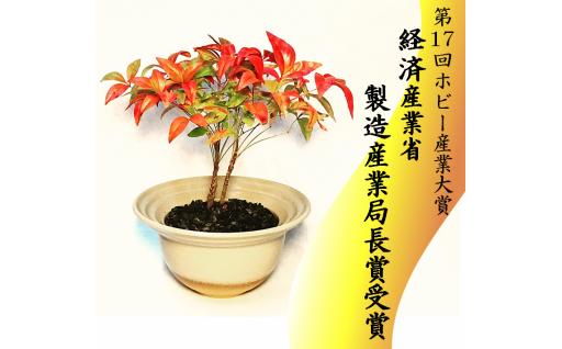 限定7個 64-(8)川竹庭園オリジナルbon彩 Samon -ナンテン