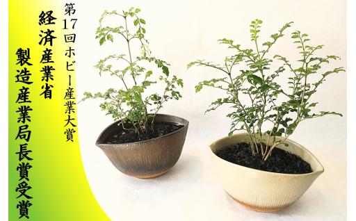 64-(3)川竹庭園オリジナルbon彩 Nikaku
