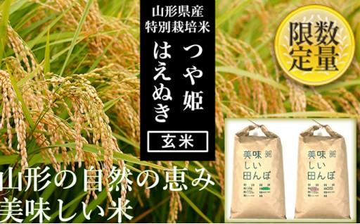 [№5805-2007]【山形県産2銘柄食べ比べ】つや姫・はえぬき 玄米各10kg