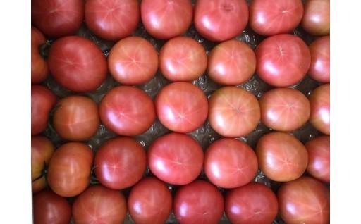 PREMIUM 桃玉トマト 3.5kg