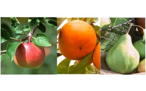 (405) 柿りんご洋ナシセット