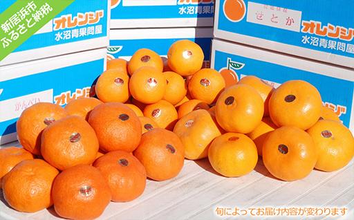 愛媛の厳選柑橘A (出荷内容は旬により異なります:出荷11月~3月限定)