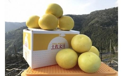 土佐文旦5kg(高知ふるさと農園)