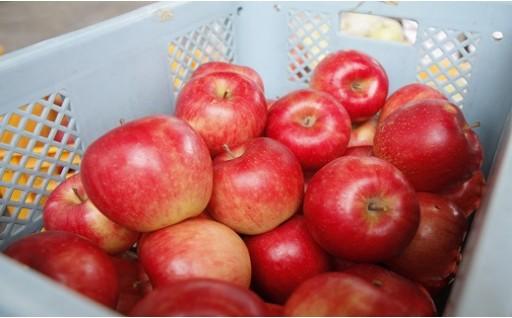 029-002 【先行予約/H30秋お届け_ふじ】味はお買い得!訳ありふぞろいりんご