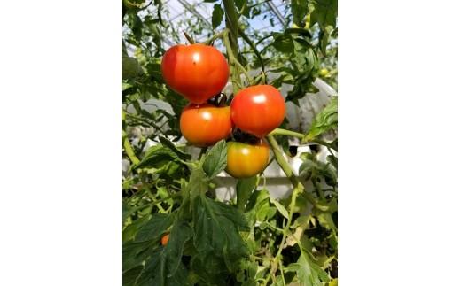 A110 最首農園の厳選高糖度フルーツトマト