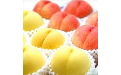 まあるい幸せ実りました もも/川中島白桃&黄金桃詰合せ2kg(5玉~6玉)