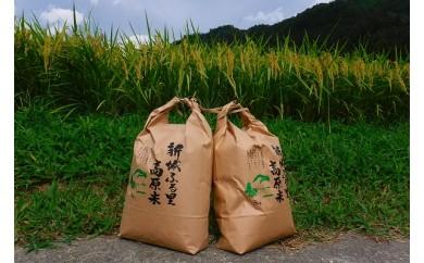 【特選】2018年収穫・新城米(きぬひかり5kg)