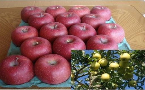 0015-5 安曇野産 季節のりんご