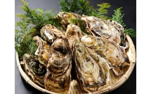 鮮度抜群!北海道寿都産活牡蠣たっぷり召し上がれ(A253)