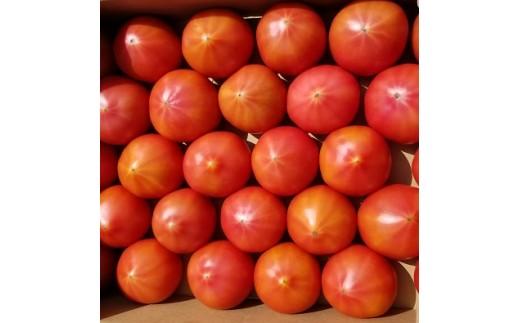 A606 ごじゃ箱の樹で熟した絶品トマト