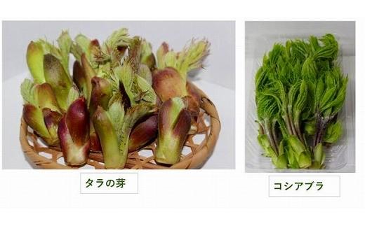 A48197 山菜セットA