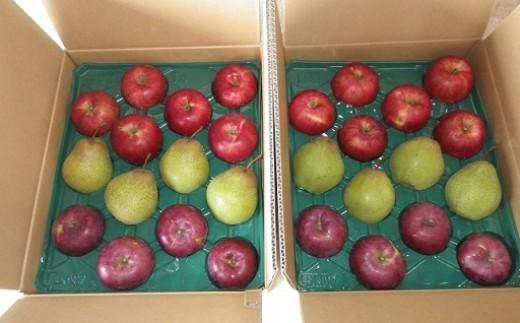【もり園】季節のりんごと千両梨の詰合せ(北海道仁木町産)
