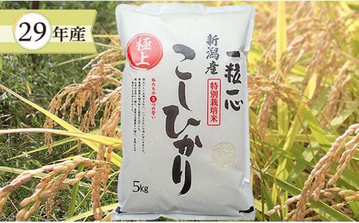 1-316 【29年産】新潟県長岡産特別栽培米コシヒカリ5kg