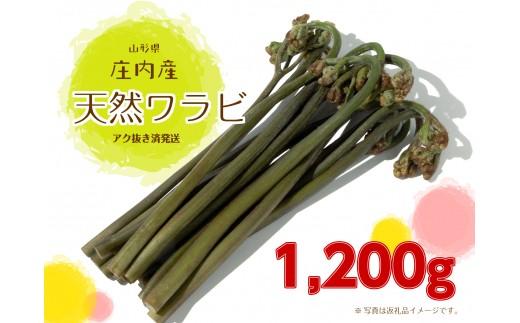 NA307 庄内産 天然ワラビ(アク抜き済発送)