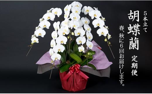 H-3 花のある毎日「胡蝶蘭5本立て」定期便(年6回)