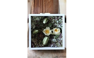 ベルギー産アイスフラワー スイレン「モネの庭」エコロジーの花