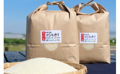 近江米「コシヒカリ」 20kg