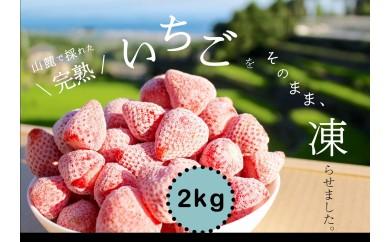 <限定>完熟!南島原産の冷凍いちご【2018年収穫】2kg(500g×4個)