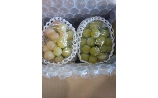 18-268.ぶどうの詰合せ小箱(種なし)