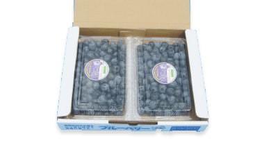 ブルーベリーカントリー井戸園芸産 完熟フレッシュブルーベリー「400g×2パック」