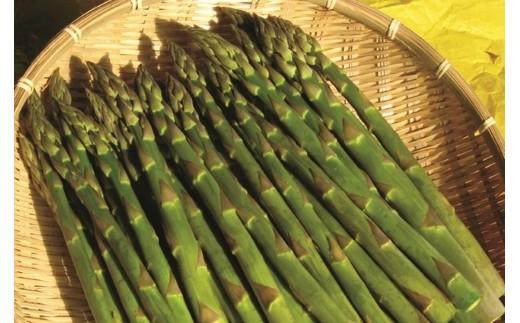 1-10 ステビア栽培グリーンアスパラ2kg