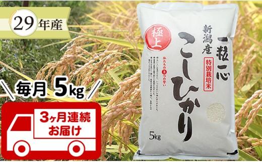 3-033 【3ヶ月連続お届け】新潟県長岡産特別栽培米コシヒカリ5kg