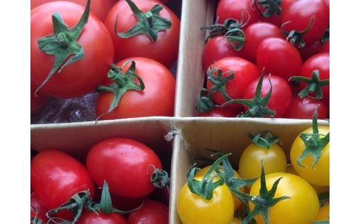 1-16 ミネラルいっぱい自慢のトマト3kgセット