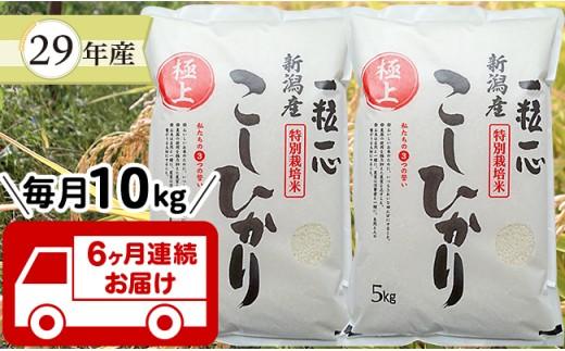【6ヶ月連続お届け】新潟県長岡産特別栽培米コシヒカリ10kg
