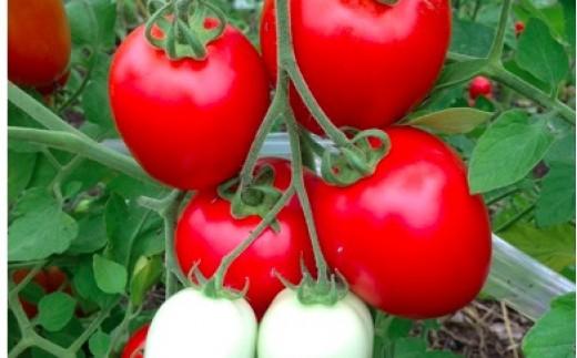A16 トマトファーム飛騨 自然栽培イタリアントマトお二人様用