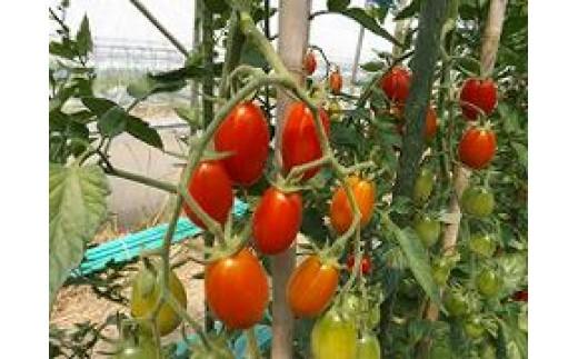 B103 あったか農園フルーツトマト(ミニ)キラメキ【3kg】