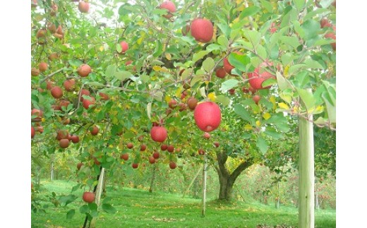 B034 飛騨高山産完熟みつ入大玉サンふじ5kgと干しリンゴのセット