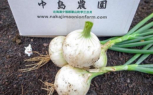 夏季限定「玉葱ひとすじ。中島農園」白玉葱5kg