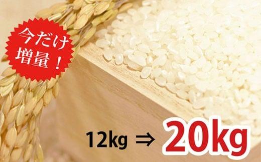 30-0021【増量!】里山のおいしいヒノヒカリ(12㎏→20㎏)【8000pt】