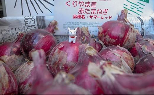 夏季限定「玉葱ひとすじ。中島農園」赤玉葱5kg