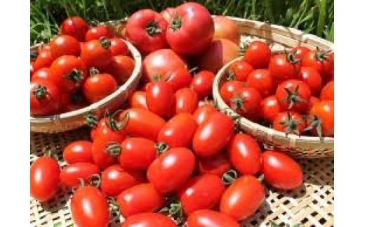 B104 あったか農園トマト3種セット【大玉、中玉、ミニ各2kg】