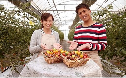 まるでトマトの宝石箱!フルーツジュエリートマト