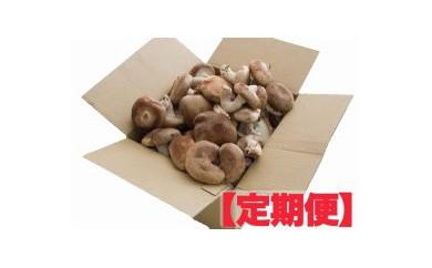 生椎茸 定期便【 1kg × 4ヶ月 】