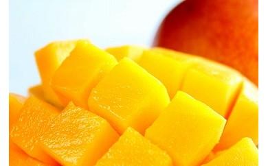 南国の恵み完熟マンゴー<ご家庭用>1kg 【先行予約】