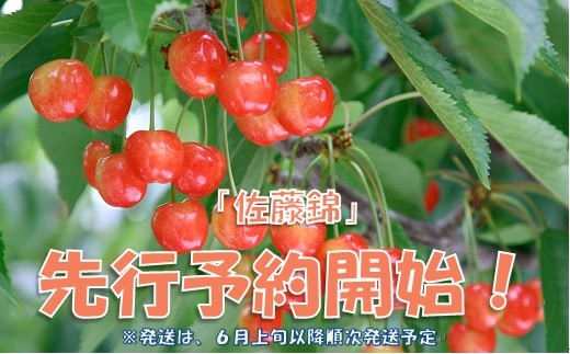 山梨県産 さくらんぼ佐藤錦 500g相当 Presents by Katerial