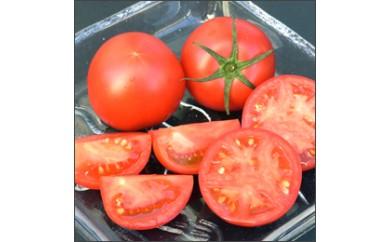 高知市春野産 フルーツトマト